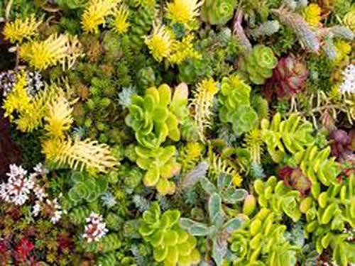 گیاهان بام سبز