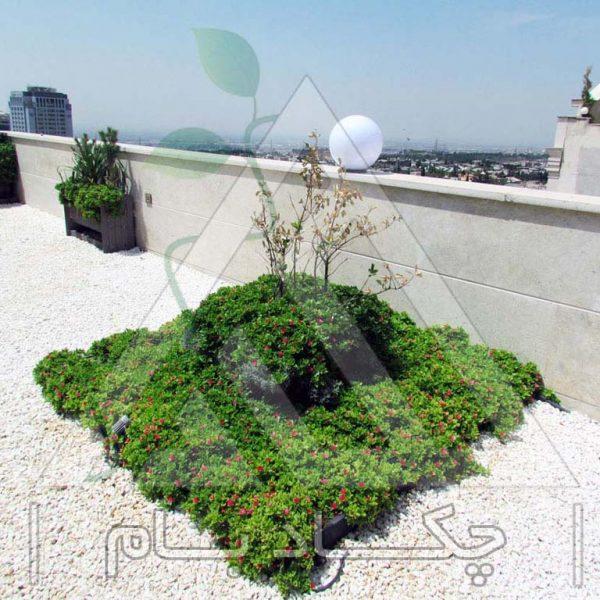 پروژه بام سبز آقای کجبافی ۱۳۹۴