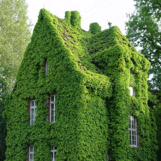 پوشش گیاهی