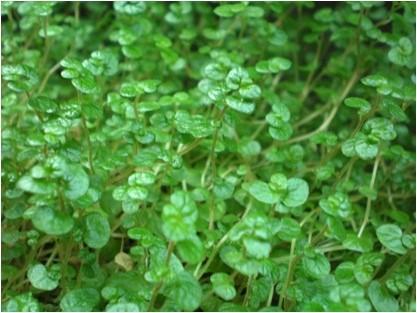 گیاهان مناسب برای دیوار سبز