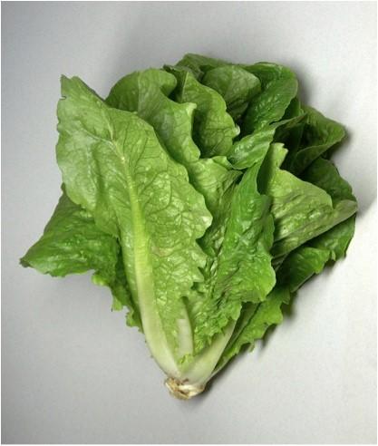گیاهان مناسب برای بام سبز و دیوار سبز
