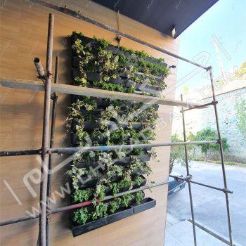دیوار سبز ساران - چکادبام