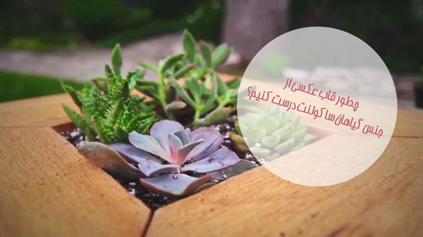 قاب عکسی از جنس گیاهان ساکولنت