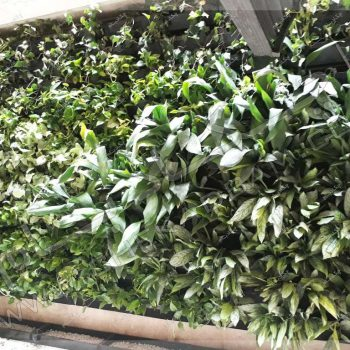 پروژه گرین وال آقای عسلی ۱۳۹6