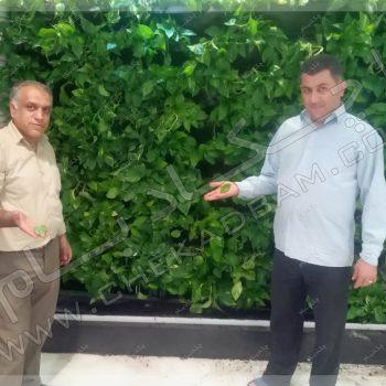 پروژه گرین وال شرکت ایران کیش سال ۱۳۹۶