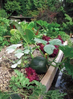 مقالات بام سبز باغ سبزیجات
