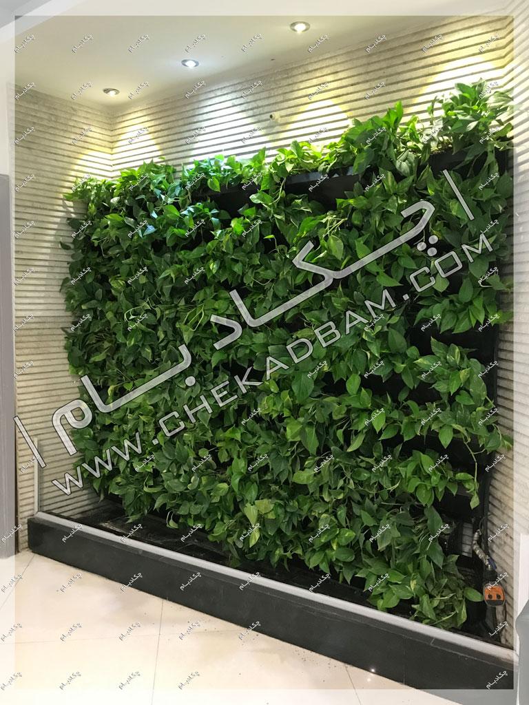 پروژه دیوار سبز شرکت ایران کیش
