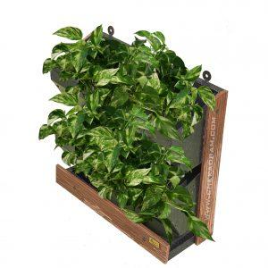 تابلو سبز خانگی با گیاه